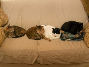 The felines line up and stake their claim.